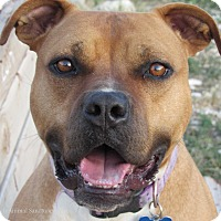 Adopt A Pet :: Freida - Hartville, WY