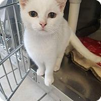 Adopt A Pet :: Carol - Chippewa Falls, WI