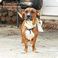 Basset Hound Mix Dog for adoption in Aiken, South Carolina - Sassy