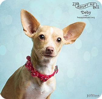 Dachshund/Chihuahua Mix Dog for adoption in Chandler, Arizona - Deby