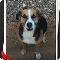 Adopt A Pet :: Regan - Apache Junction, AZ