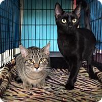 Adopt A Pet :: Shadow & Bella - Pasadena, CA