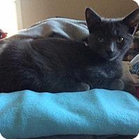 Adopt A Pet :: Buddha - Central Islip, NY