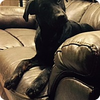 Adopt A Pet :: Dodson - Hagerstown, MD