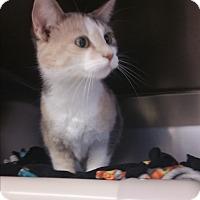 Adopt A Pet :: Cara - Chippewa Falls, WI