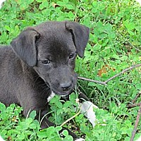 Adopt A Pet :: IVY - Humboldt, TN
