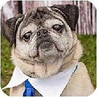 Adopt A Pet :: Lewie-NJ - Mays Landing, NJ