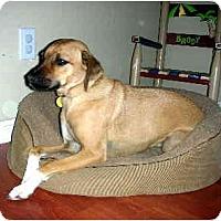 Adopt A Pet :: Alesha - Scottsdale, AZ