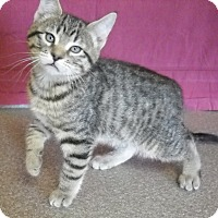 Adopt A Pet :: Gilligan - Larned, KS