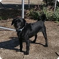 Adopt A Pet :: Banjo - Campbell, CA