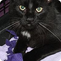 Adopt A Pet :: Timmy - Burlington, WA