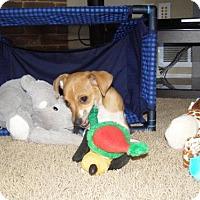 Adopt A Pet :: Yogi  3 Months - C/S & Denver Metro, CO