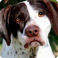 Adopt A Pet :: GABBY(WOW!! SO SMART!!) - Wakefield, RI