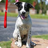Adopt A Pet :: Ripley - West Orange, NJ