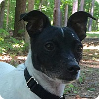 Adopt A Pet :: Sam - Allentown, PA