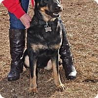 Adopt A Pet :: Auna - Morrisville, NC