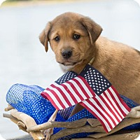 Adopt A Pet :: George Washington - Glastonbury, CT