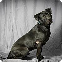 Adopt A Pet :: La Bennett - Tulsa, OK