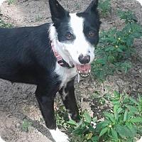 Adopt A Pet :: Robin - Bradenton, FL