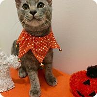 Adopt A Pet :: JUSTICE - Burlington, NC