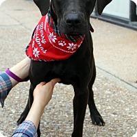 Adopt A Pet :: Buck - Arlington, TX