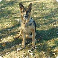 Adopt A Pet :: Shelby - Portland, ME