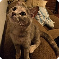 Adopt A Pet :: Polly - Harrisonburg, VA