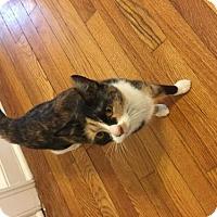 Adopt A Pet :: Sammy - Ocean, NJ