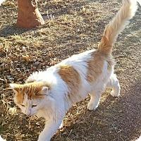 Adopt A Pet :: Hagrid - Colorado Springs, CO