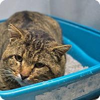 Adopt A Pet :: Isaac - Pittsburg, KS