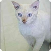 Adopt A Pet :: Sinatra - New York, NY