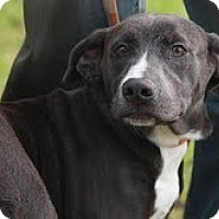 Adopt A Pet :: Sage(200$ Happy Homing-days fe - Brattleboro, VT