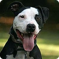 Adopt A Pet :: Oreo - New Orleans, LA