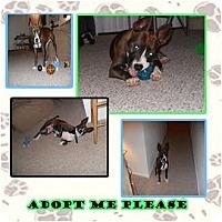 Adopt A Pet :: Radar - Orlando, FL