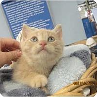 Adopt A Pet :: Stewie - Sterling Hgts, MI