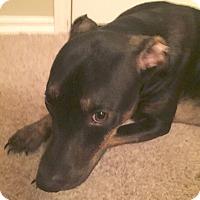Adopt A Pet :: Brody - Yukon, OK