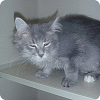 Adopt A Pet :: Derek - Hamburg, NY