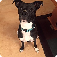Adopt A Pet :: Leela - North Brunswick, NJ
