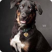 Adopt A Pet :: Puff - Pitt Meadows, BC