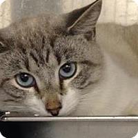 Adopt A Pet :: Marshmallow - Gainesville, FL