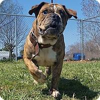 Adopt A Pet :: Rudy - Elyria, OH