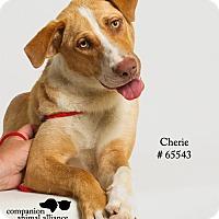 Adopt A Pet :: Cherie - Baton Rouge, LA