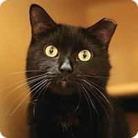 Adopt A Pet :: Clyde - Marlborough, MA