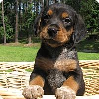 Adopt A Pet :: Marty - Groton, MA