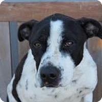 Pointer Mix Dog for adoption in Yukon, Oklahoma - Drake