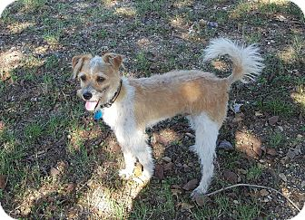 Terrier (Unknown Type, Small) Mix Dog for adoption in Trenton, New Jersey - Elton
