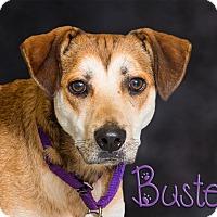 Adopt A Pet :: Buster - Somerset, PA