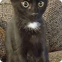 Adopt A Pet :: Ahoy - Rocklin, CA