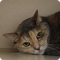 Adopt A Pet :: Chessie - Denver, CO