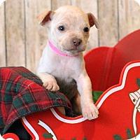 Adopt A Pet :: Beatrice - Waldorf, MD